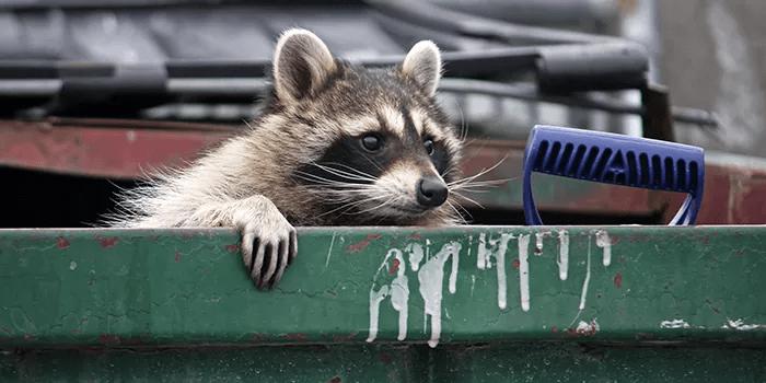 pest in dumpster bin